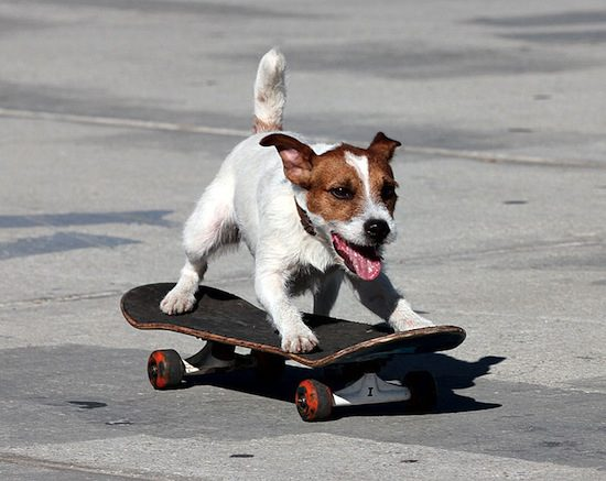 YouTube, more than dogs on skateboards