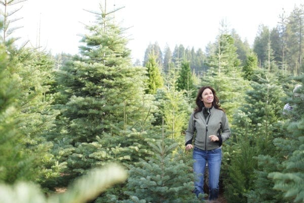 How To Pick The Perfect Real Christmas Tree