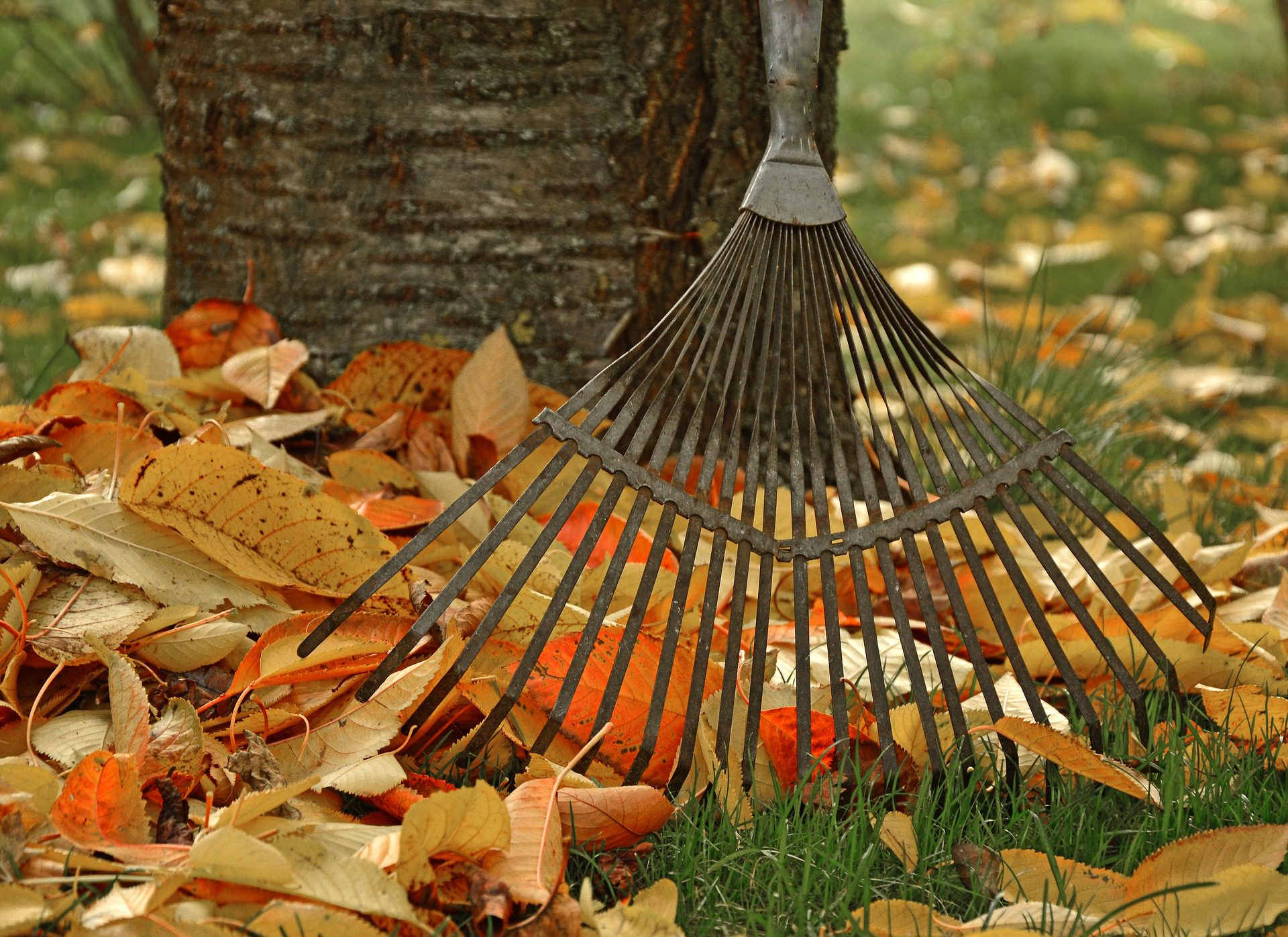 Autumn Gardening: How to keep your garden thriving into winter