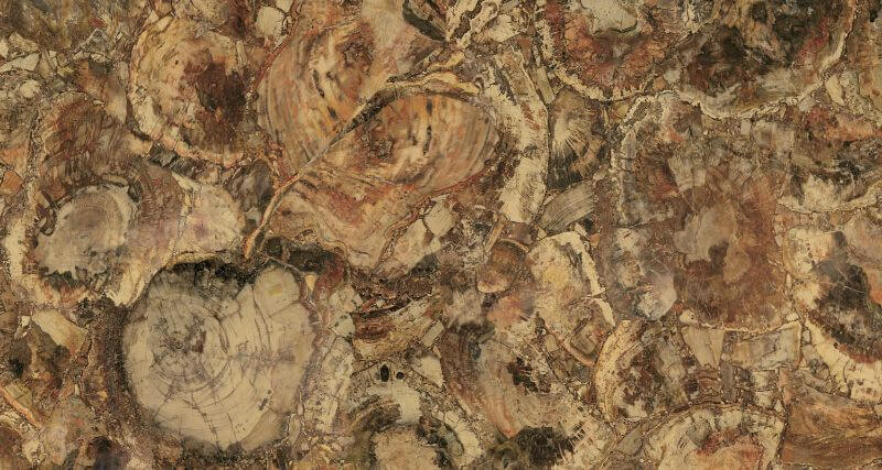 fossil-gold-60x120